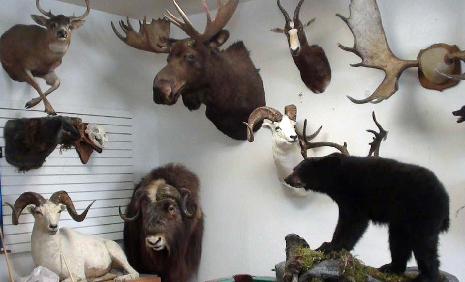 Top-Gun-Taxidermy-Alaska