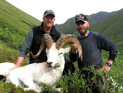 Dall-Sheep-Hunting